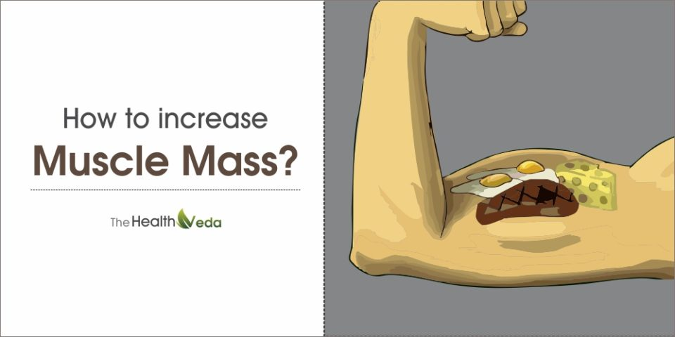 How to Increase Muscle Mass?