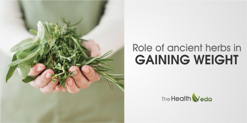 Role of Ancient Herbs in Gaining Weight