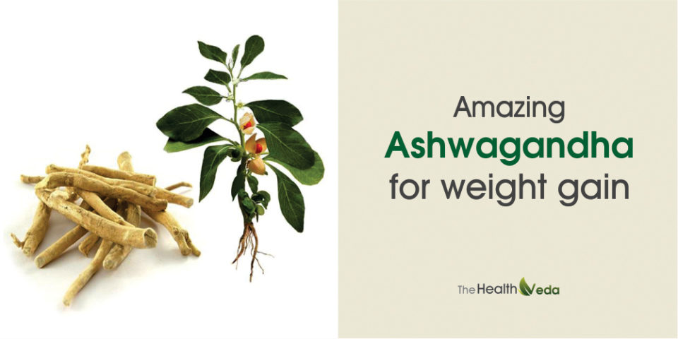 Amazing Ashwagandha for Weight Gain