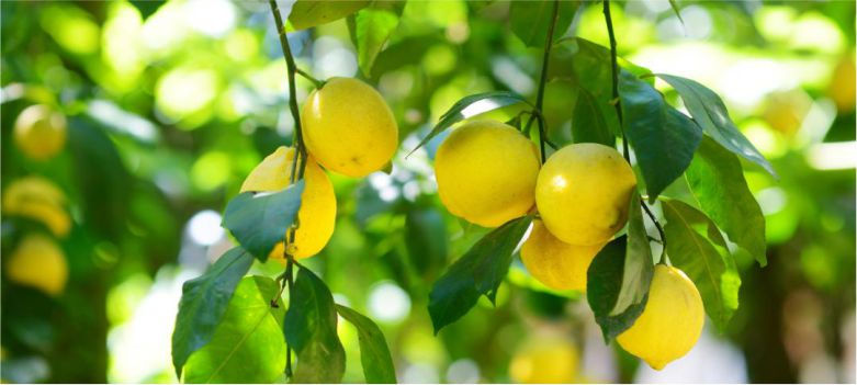 Lemon-is-helpful-in-controlling-high-blood-pressure