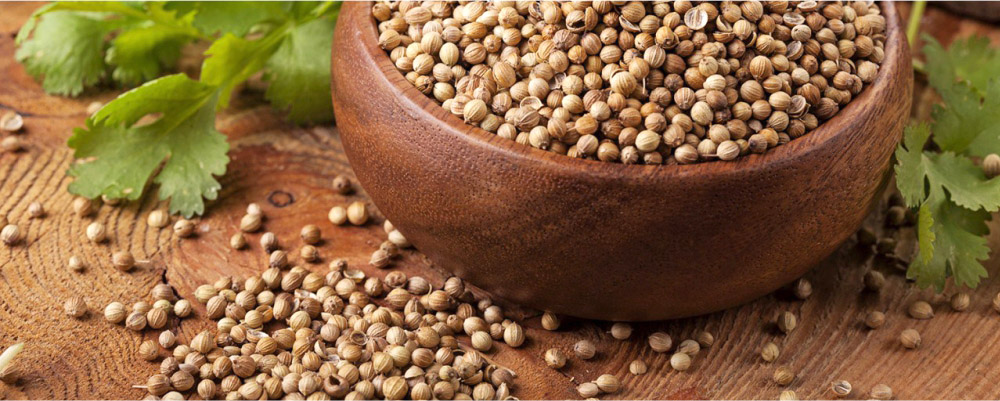 Coriander-Seeds-helps-you-to-lower-down-the-cholesterol