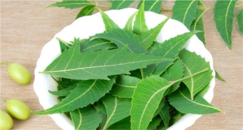 neem-to-Reduce-Hair-Fall-Naturally
