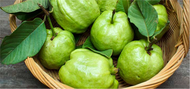 How can Eating Guava be Effective for Your Health? Know Here!