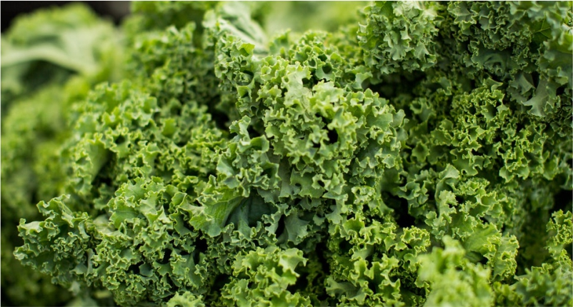 Kale-You-Must-Add-in-Your-Diet`