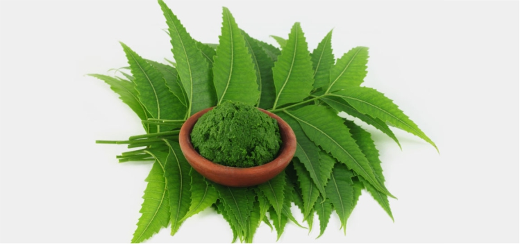 How Neem is Effective for Your Health- Know Here!